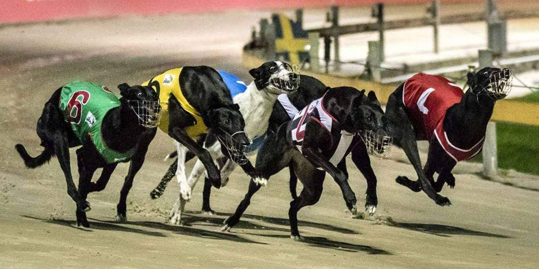 Greyhound Tipping